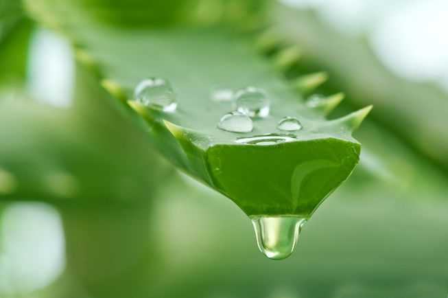 Healing Properties Of Aloe Vera