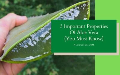 3 Important Properties Of Aloe Vera (What You Should Know Before Start Using!)