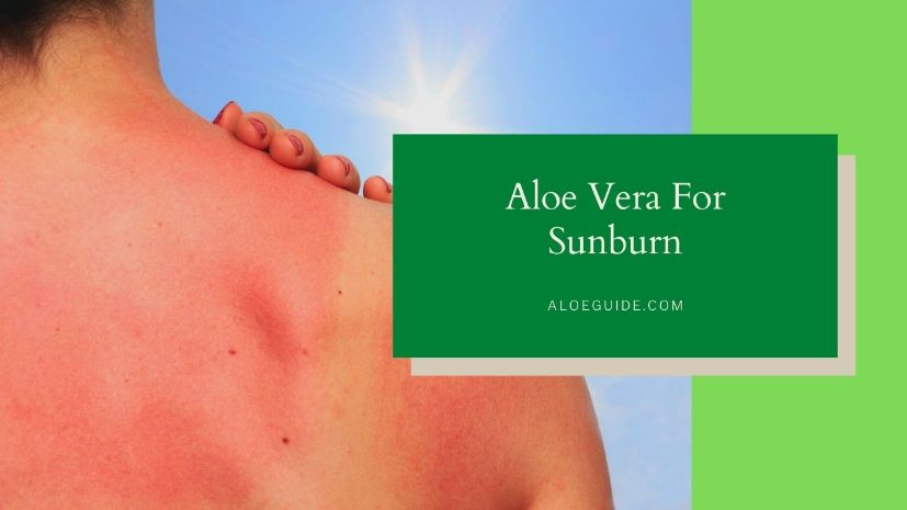 Aloe Vera For Sunburn [How to Use & Does it Works?]