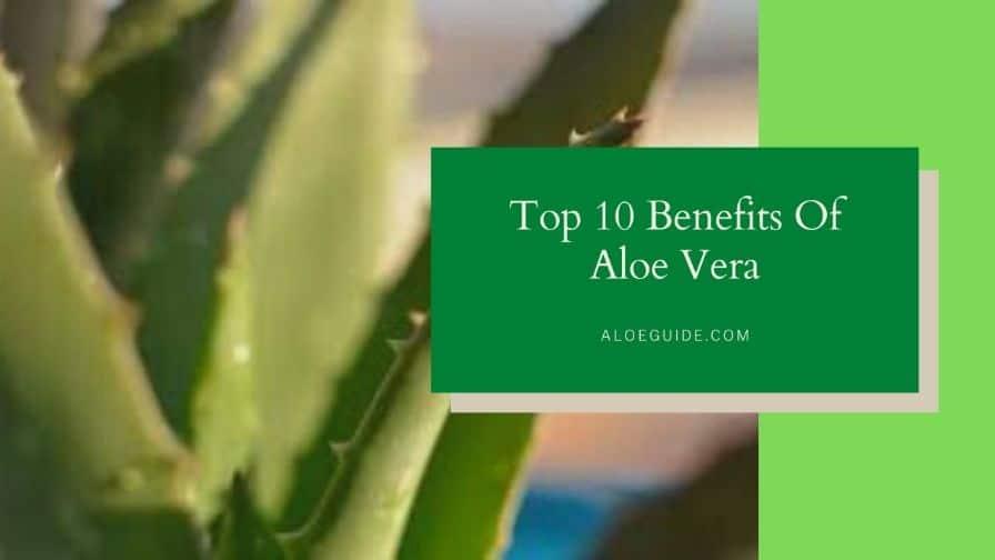 10 Major Benefits Of Aloe Vera (You Should Know!)