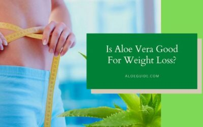 The secret of Using Aloe Vera For Weight Loss [Update:2021]
