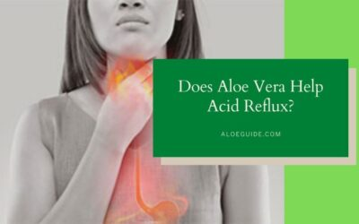 Using Aloe Vera For Acid Reflux [Thing You Should Know]