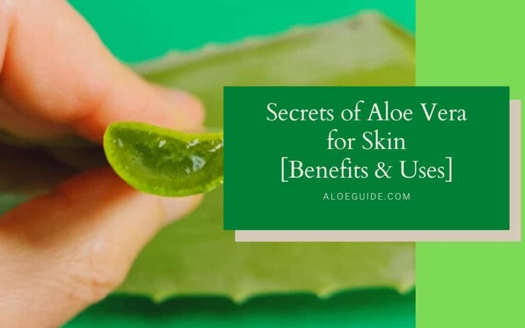 8 Best Uses Aloe Vera For Skin [Shine & Glow]