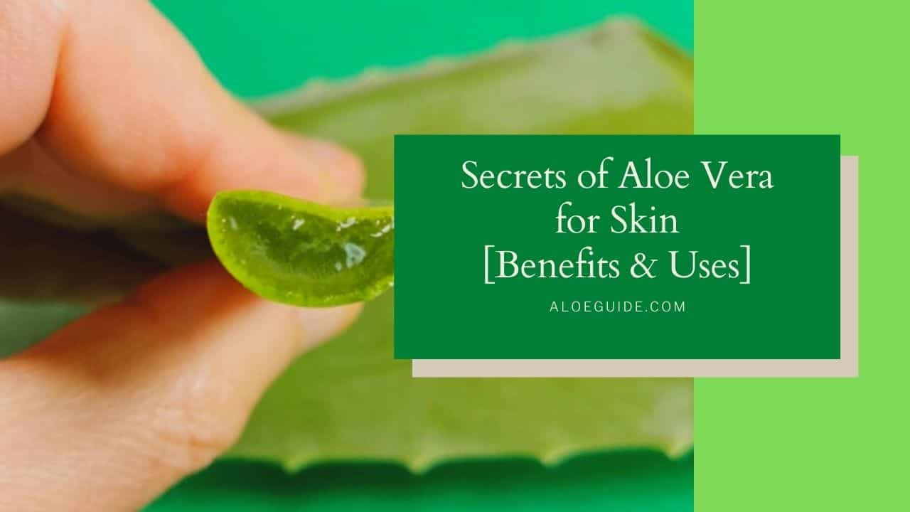 Aloe Vera For Skin and Face